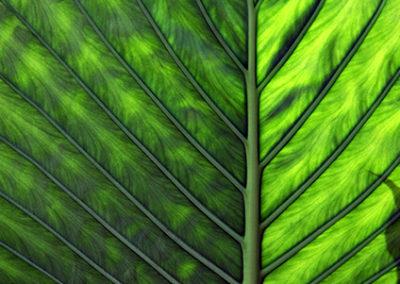 MS117R10 - Green Leaf