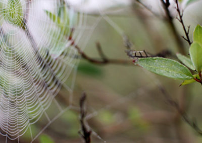 LC254R20 - Spider's Web