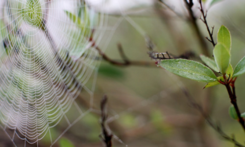 0012 LC254R20 Spiders Web