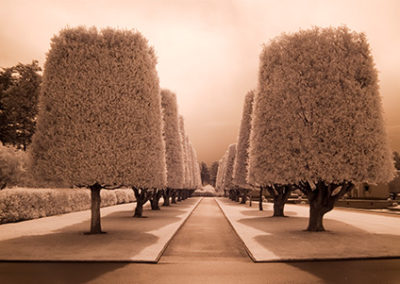 MN110R10 - Row of Trees