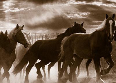 MN111R10 - Running Horses and Sunbeams