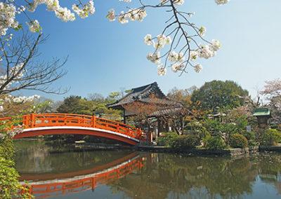 MN120R10 - Cherry Blossom & Bridge #2