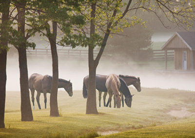 MN122R10 - Horses in the Mist #2