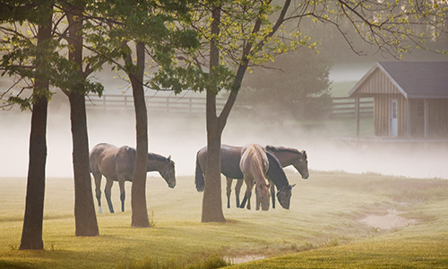 MN122R10 Horses in the Mist 2