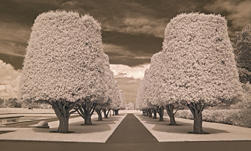 MN025R10 Row Of Trees 1