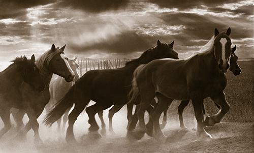MN026R10 Running Horses and Sunbeams
