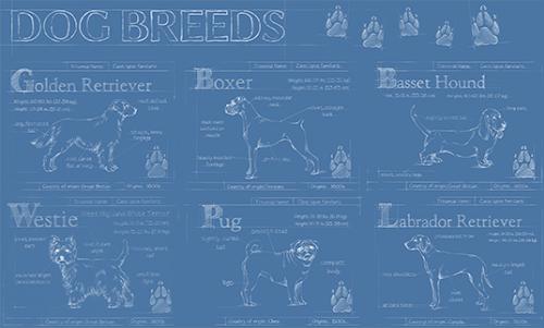 WAEH003R200 Dog Breed Infograph