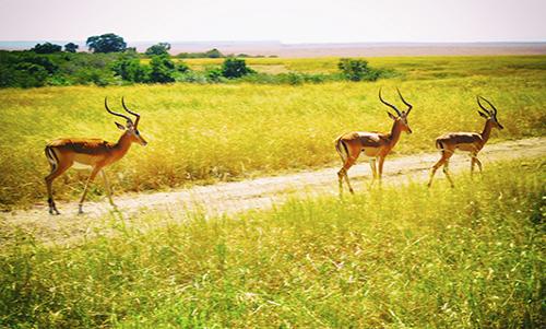 WAGM001R200 African Plains I