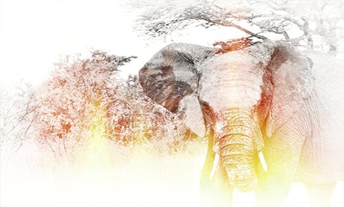 WAGM009R200 Golden Elephant
