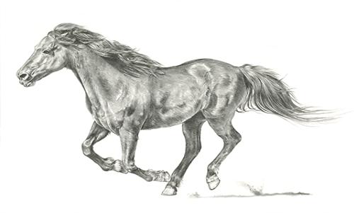 WAJP101R200 Wild Horse Portrait I